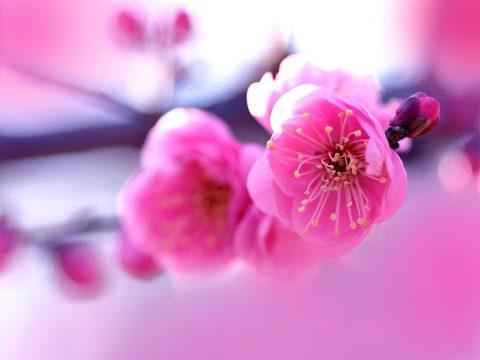 Bloemen, geur